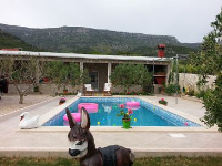 11016 - K-11016 - island brac house with pool