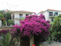 Holiday home 139676 - code 116755 - Apartments Hvar