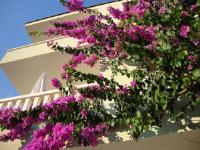 Apartments Villa Čizmić - Apartment mit 1 Schlafzimmer, Terrasse und 2 Badezimmern - Baska Voda