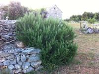 Country House Dočine Selca - Chambre Lits Jumeaux - Vue sur Montagne - Selca