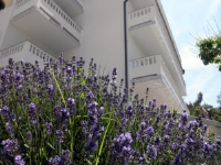 Apartments Ivana - Two-Bedroom Apartment with Balcony - First Floor - Apartments Palit