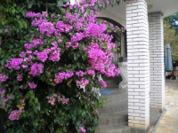 Pansion Adria Haus - Apartman s 2 spavaće sobe s terasom - Apartmani Posedarje