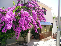 Apartment Rakam - Room for 2 persons - Rooms Split