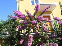 Holiday Apartment Podstrana - Apartment for 2+2 persons - Podstrana